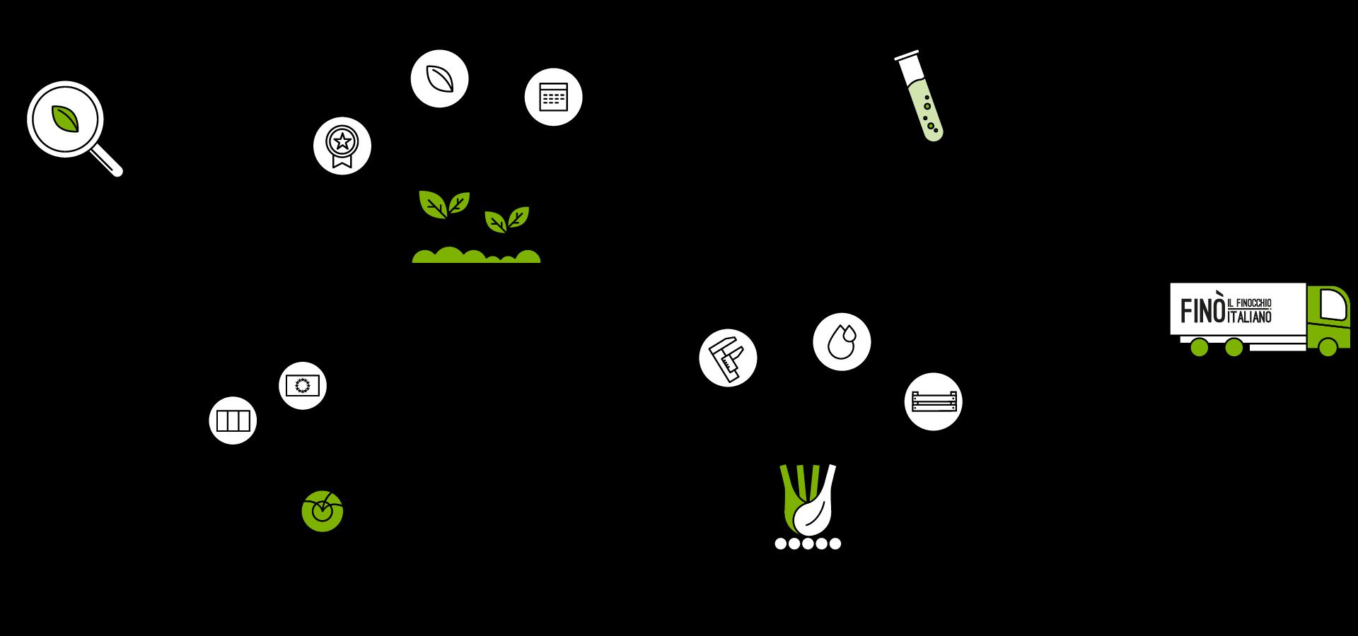 Infografica-filiera_Fino-finocchio-Italiano_Desktop