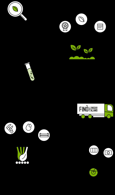 Infografica-filiera_Fino-finocchio-Italiano_Smartphone