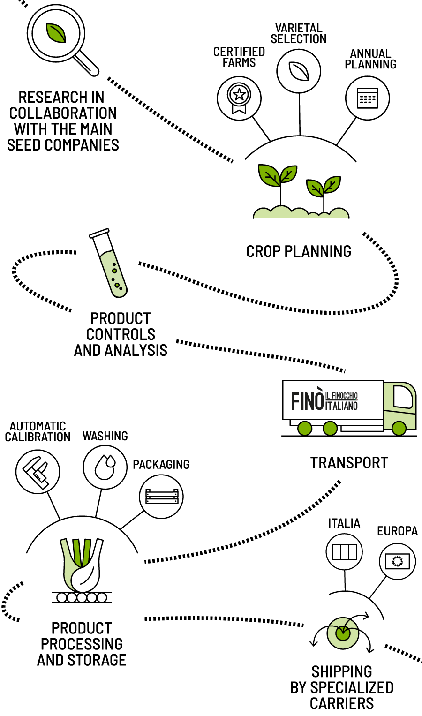 Infografica-filiera_Fino-finocchio-Italiano_Smartphone_Eng