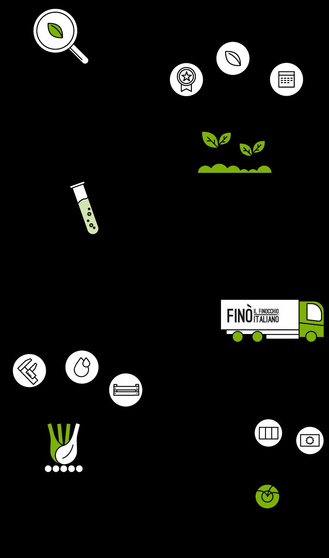 Infografica-filiera_Fino-finocchio-Italiano_Smartphone_FR